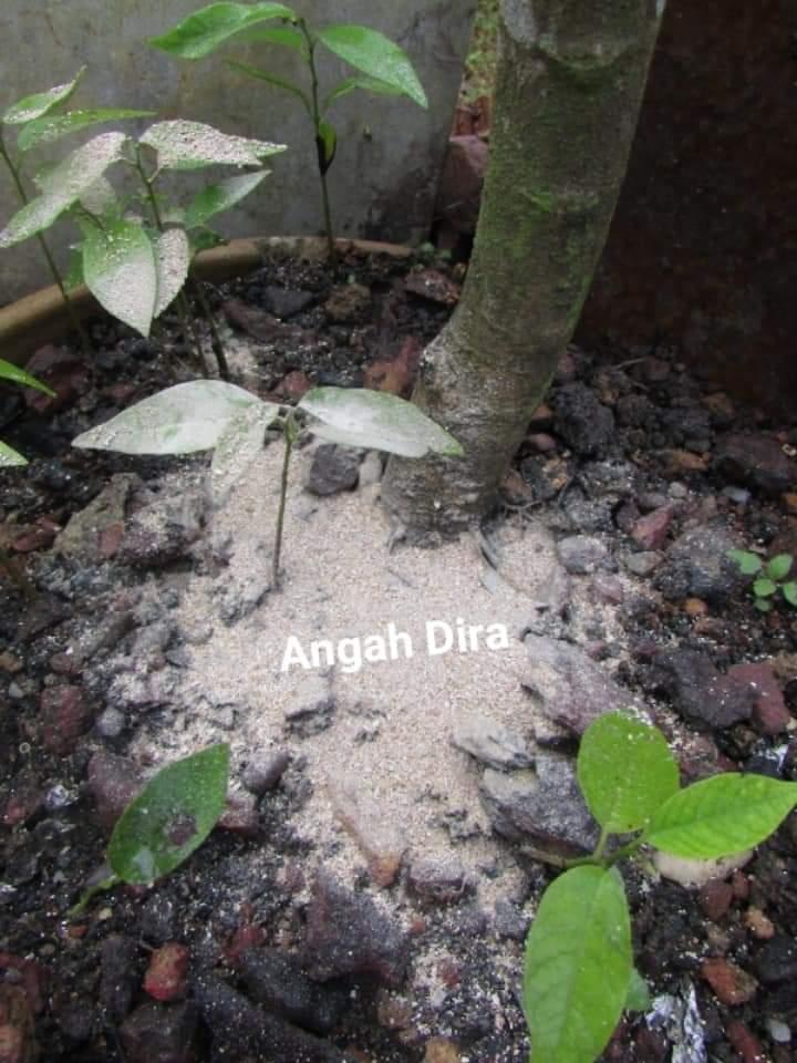 Kebaikan kulit telur untuk tanaman
