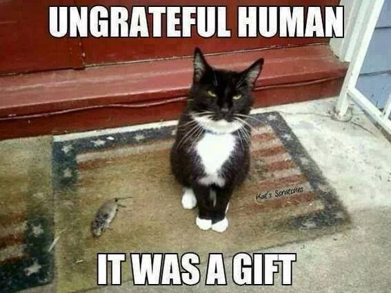 tanda kucing sayang kita 1