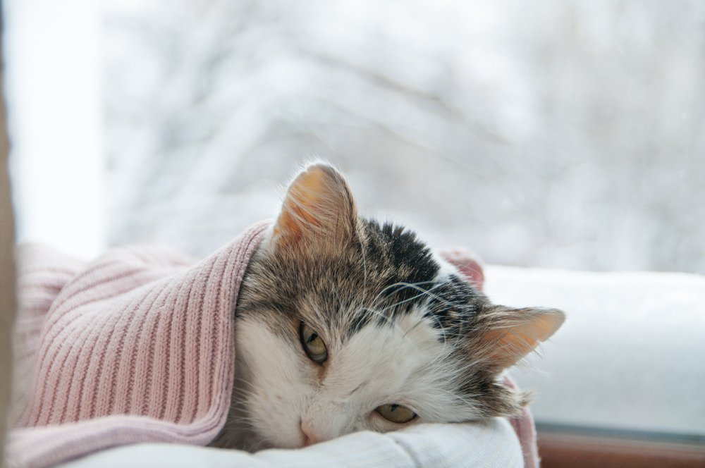 tanda kucing sakit demam