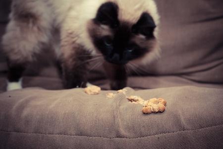 kenapa kucing muntah