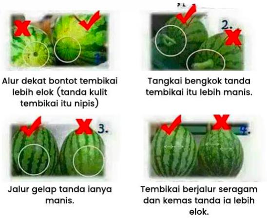 khasiat tembikai