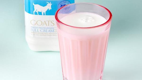 Cuba berikan susu kambing