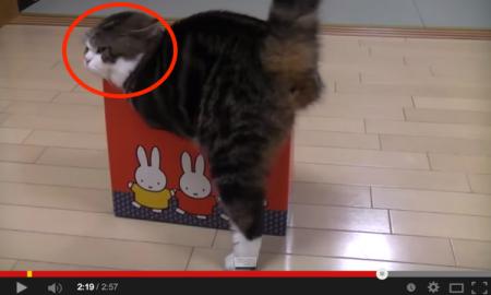 Kotak Sangat Kecil, Tapi Kucing Ini Cuba Masuk Juga. Comel Sangat!