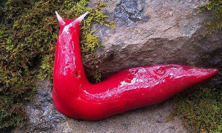 Binatang Apa Yang Berwarna 'Pink' Ini? Sungguh, Salah Satu Keajaiban Alam Ciptaan Allah.