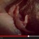 Lihat Proses Kelahiran Bayi Kanggaru Yang Menakjubkan. Hanya Untuk Yang Berani Sahaja!