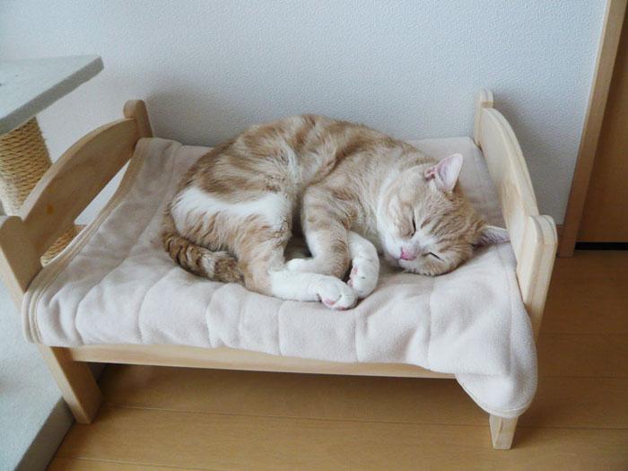 gaya-kucing-tidur-katil-ikea-duktig-04