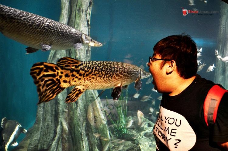 Aquaria KLCC Tumpuan Pelancong dan Pelajar – 012