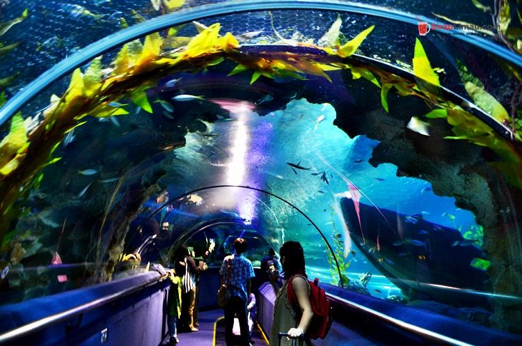 Aquaria KLCC Tumpuan Pelancong dan Pelajar - 015