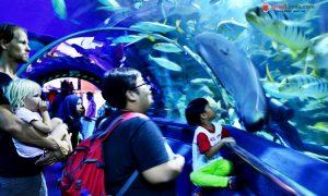 Aquaria KLCC Tumpuan Pelancong dan Pelajar - 017