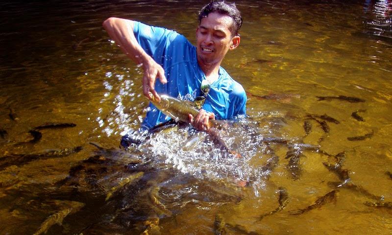 Foto Kredit: teganuku.blogspot.com http://teganukita.my/ribuan-kelah-jinak-di-sungai-petang/
