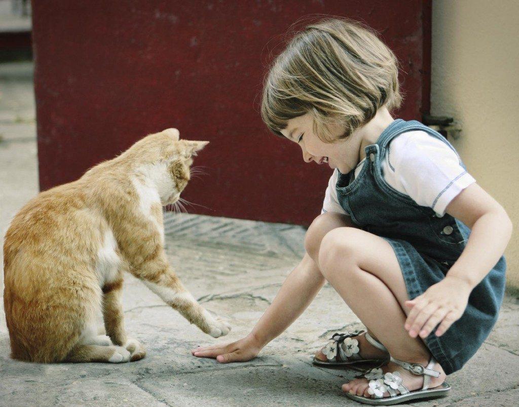 kelebihan bela kucing