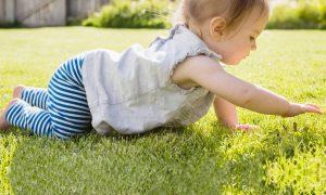 proses bayi merangkak
