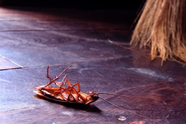 how-to-kill-roaches-fast