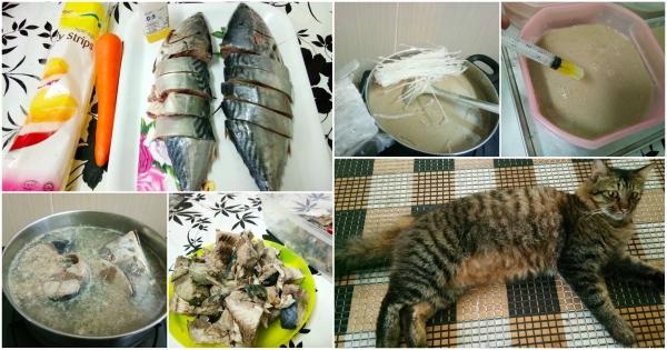 Resipi Makanan Basah Yang Mudah Untuk Si Comel Anda The Mamamiaow
