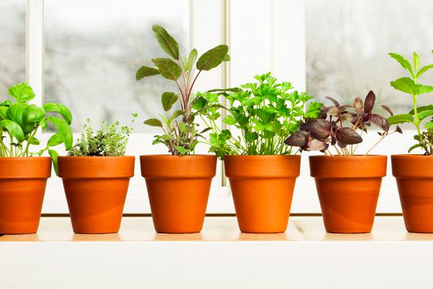 30 Ide Keren Pokok Hiasan Rumah Fatiha Decor
