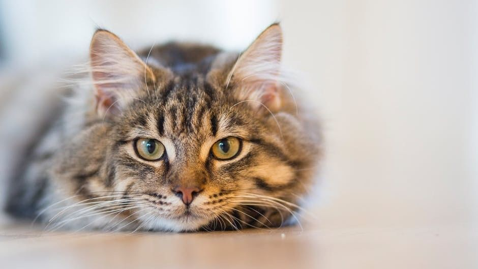 takut kucing