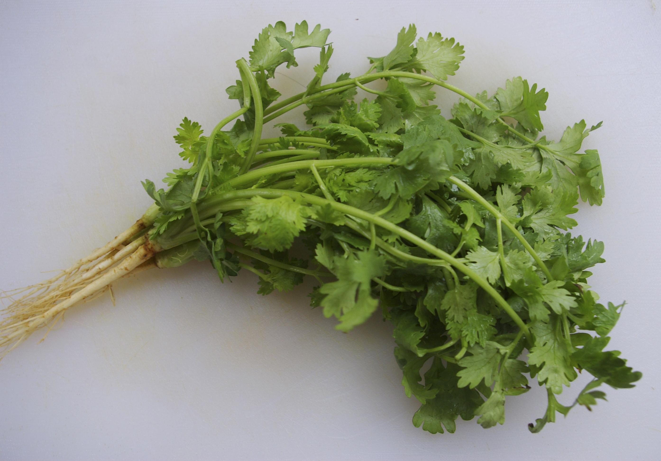 daun sup atau ketumbar