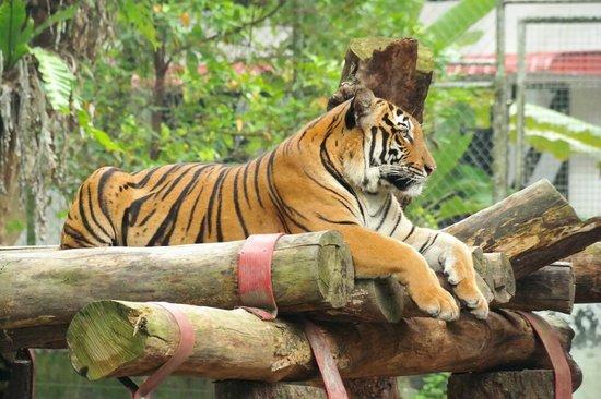 Zoo negara 2019
